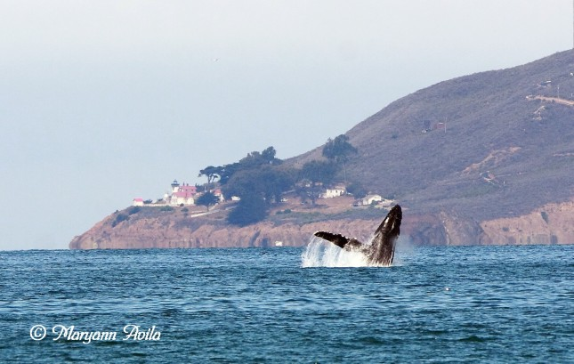 4-Point San Luis LIghthouse and Whale Photo by Maryann Avila