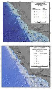 72-blue & gray whale survey