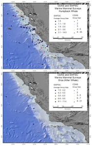 73-humpback 7 orca survey